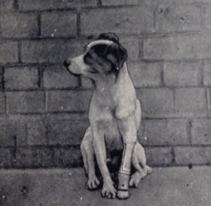 "dog with ""an artificial limb of silver and vulcanite with complete flexible and false paw"""